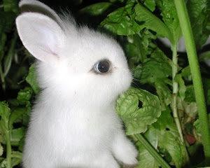 Hapeh Easter!