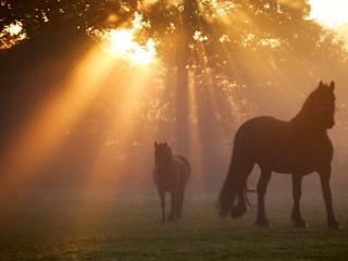 Horses in the morning sunshine